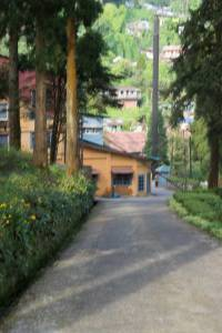 Web-Road-to-Gommotee-village-0965
